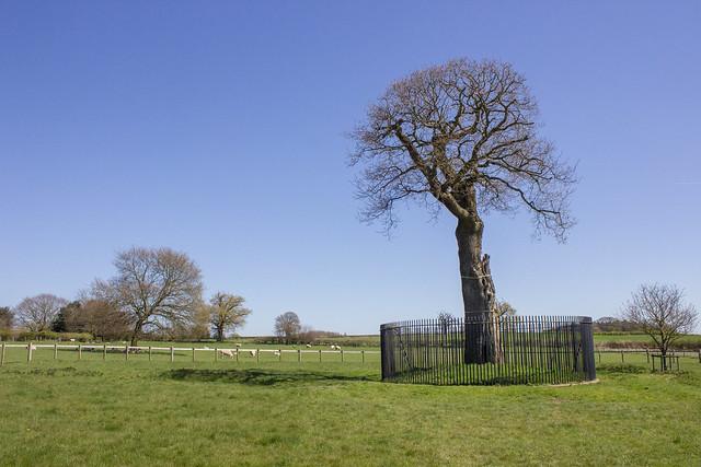 Boscobel House, Royal Oak Tree