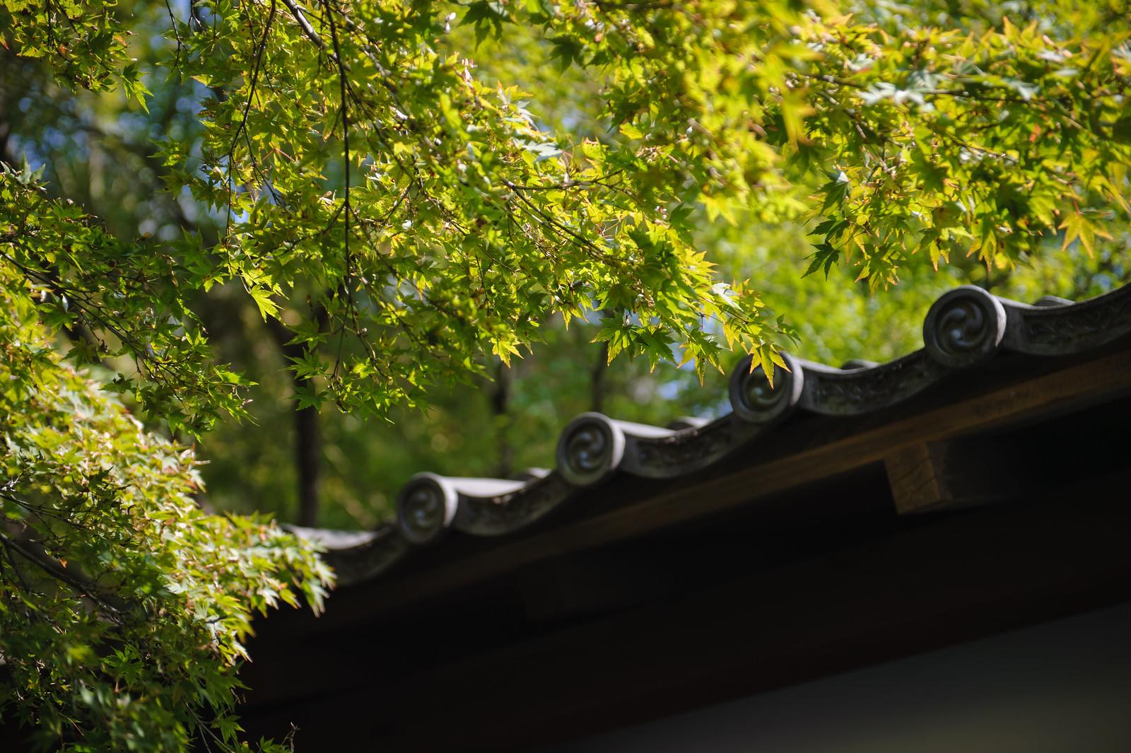 2015VQ@Kyoto-614