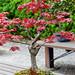 20160413-38-Bonsai at Kyoto Botanic Gardens