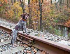 1650 Tiny Piper on the tracks