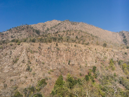 india animal cow hill polo gujarat reserveforest sabarkantha bimakhed abhapur