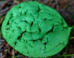 Weird green blob appears in the Howe of Alford. Nanu nanu.