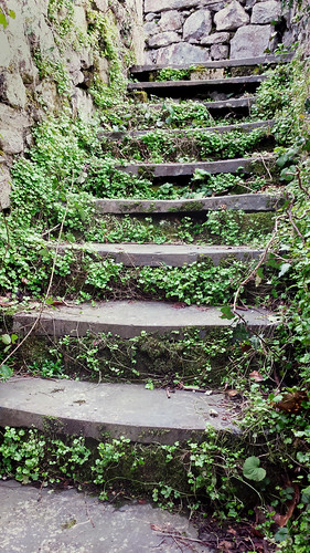 Overgrown flight of steps