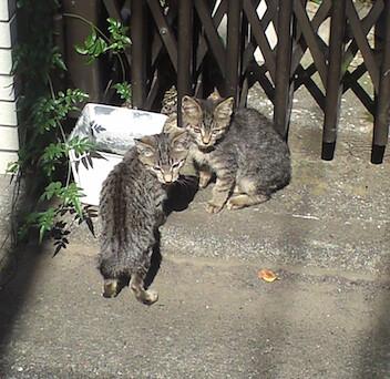 お水を飲む子猫2匹