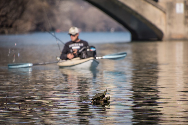 turtle & kayaker