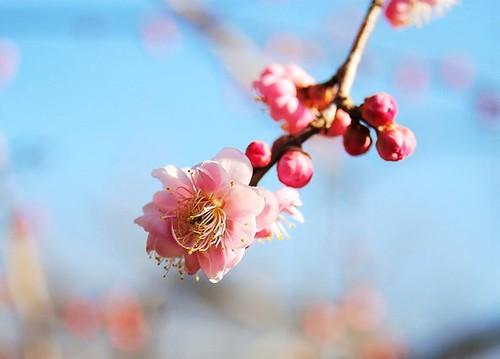 ★庭の春★藤野から・・・