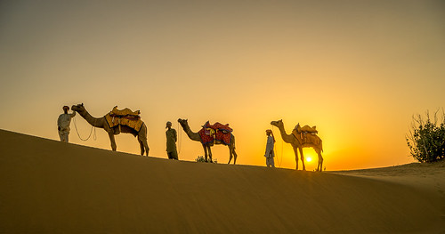 3 Camels and their riders at sundown - Thar Desert - Nr Jaisalmer - Rajasthan - India