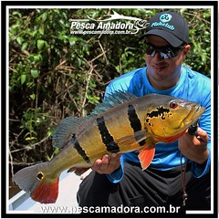 André Sesquin com o peixe mais cobiçado da Amazônia.  #pescaesportiva #pescaamadora #pesqueesolte #baitcast #fly #tucunare #pavone #pavon #peacock #peacockbass #flyfishing #fish #bassfishing #bass #pescador #pescaria #lures #fishinglures #catchandrelease
