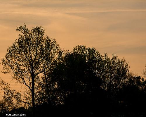 trees nature sunrise unitedstates southcarolina
