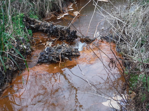 Iron-Rich Waters, Flitwick Moor