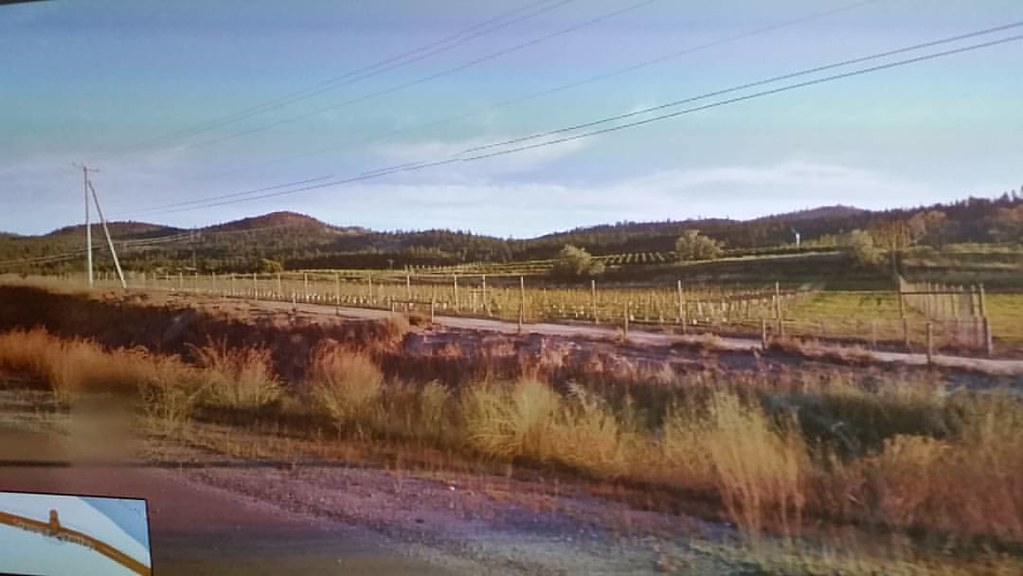 Vines by the highway. 81 km from Salmon Arm #ridingthroughwalls