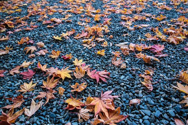 20141122-武奈ヶ岳&京都ライトアップ-0072.jpg