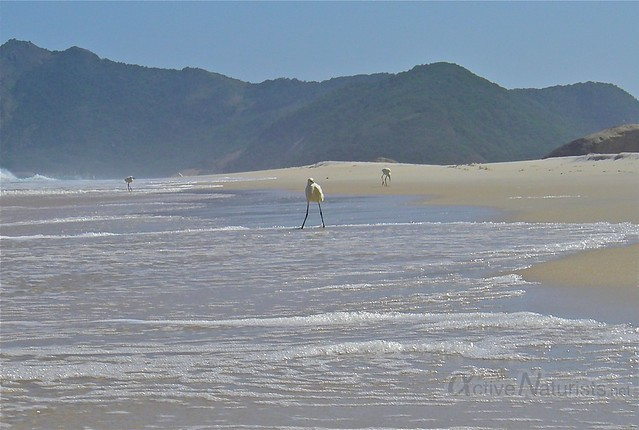view 0001 praia Abrico, Rio de Janeiro, Brasil