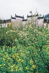 Wuyuan 2009