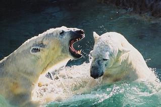 Masha (L) & Wilhelm (R) engage in some harmless play