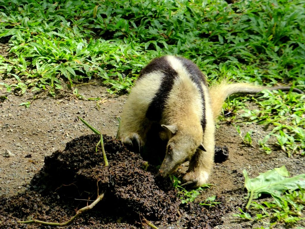 Anteater Learning To Hunt