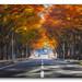 Autumn road by nntnam