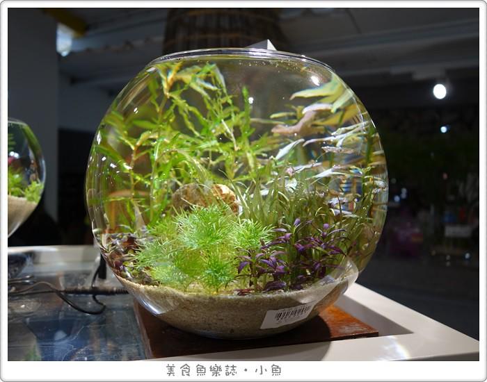 【宜蘭員山】勝洋水草休閒農場 @魚樂分享誌