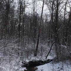Brrrr. #winter #snow #frozen creek. #columbusohio #pickerington