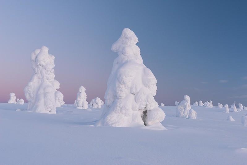 Ice trees - Äkäslompolo