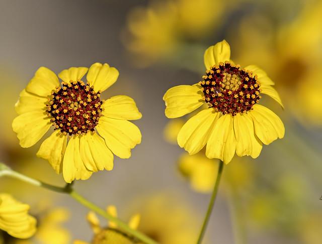 Flower 8_7D2_240216