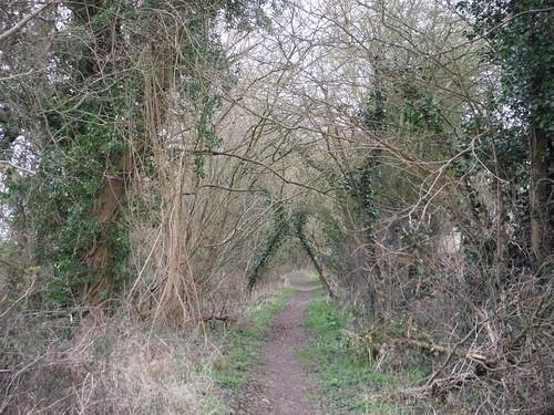 Path near Clavering Farm (I)