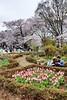 Sakura - Yoyogi Park, April 2016