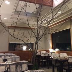 カフェに桜の木