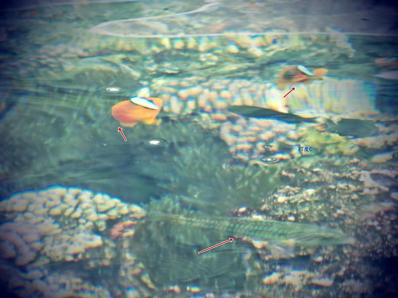 蘭嶼浮潛-環島景點-17度c隨拍 (28)