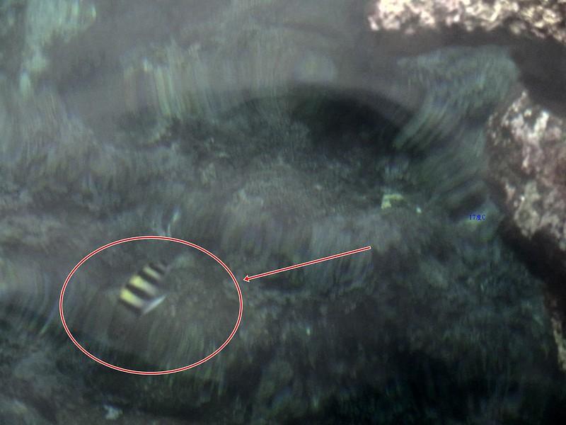 蘭嶼浮潛-環島景點-17度c隨拍 (19)