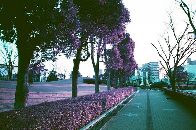 160327_NaturaClassica_LomoChrome-8