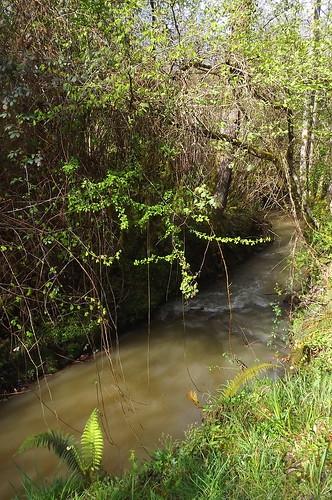Habas (40) - rivière de Lataillade