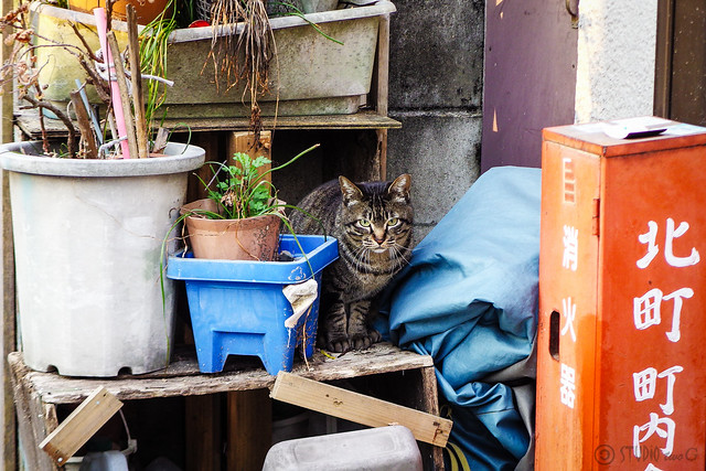 Today's Cat@2016-04-02