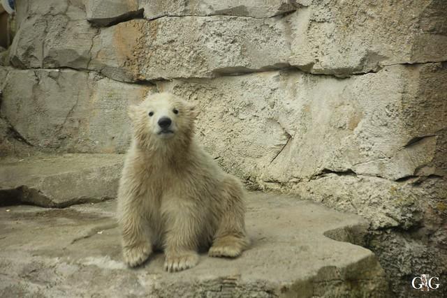 Zoo Bremerhaven 09.04.16 2.Teil4