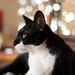 黑皮 CAT