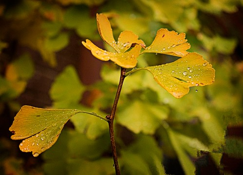 #120_MG_6973-Autumn_rain