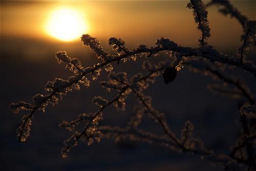 winter sunset snow vinter berry sweden sverige snö håkan d700 jylhä