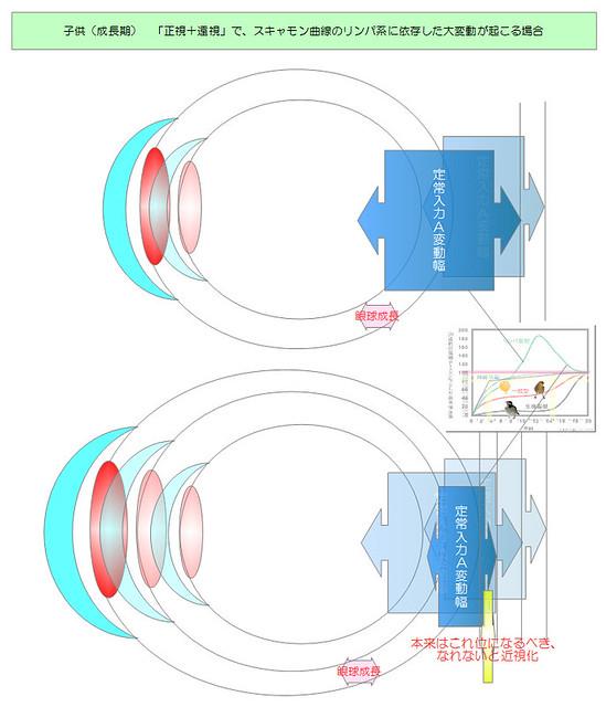 視力回復のために知りたい眼のメカニズム|独自まとめその10用06|スキャモン成長曲線リンパ系型依存の大変動|真・視力回復法|視力回復コア・ポータル