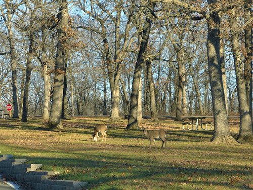 2015-11-19 - Walking at Wallace State Park - 0134 [flickr]