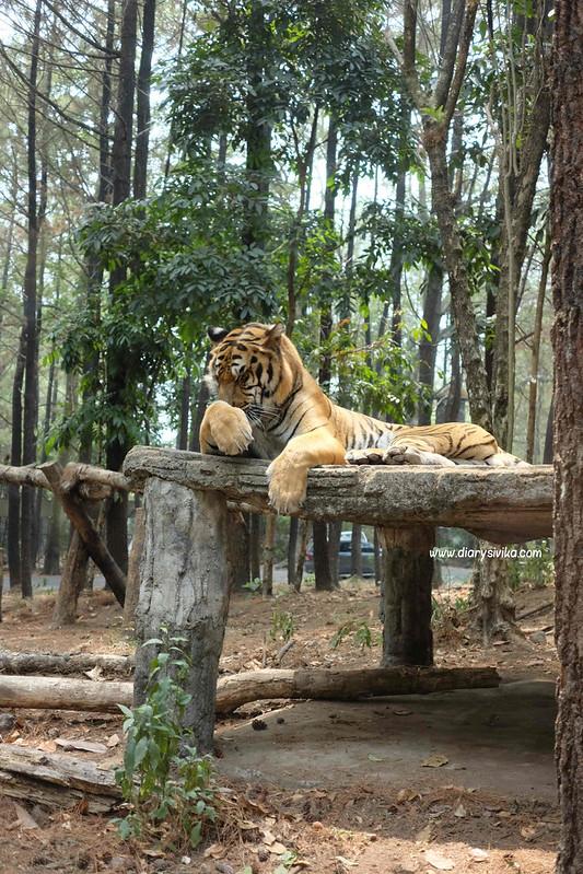 taman safari prigen 2