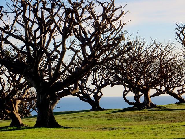 tree friends