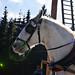 <p><a href=&quot;http://www.flickr.com/people/93892755@N02/&quot;>kaprysnamorela</a> posted a photo:</p>&#xA;&#xA;<p><a href=&quot;http://www.flickr.com/photos/93892755@N02/24832407591/&quot; title=&quot;White Horse&quot;><img src=&quot;http://farm2.staticflickr.com/1458/24832407591_285d501a1f_m.jpg&quot; width=&quot;240&quot; height=&quot;160&quot; alt=&quot;White Horse&quot; /></a></p>&#xA;&#xA;