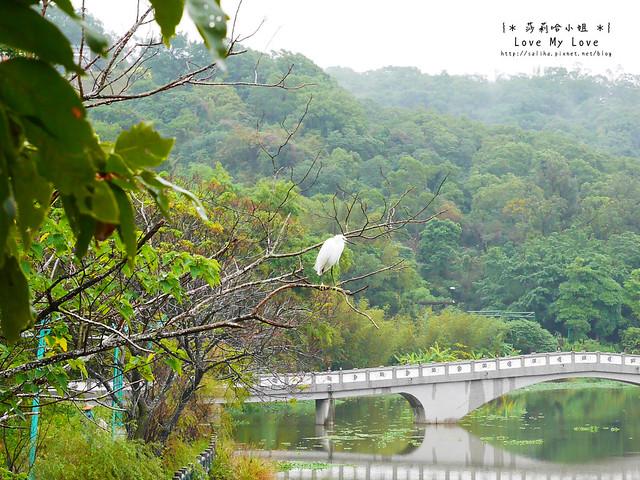 新竹一日遊景點青草湖 (12)