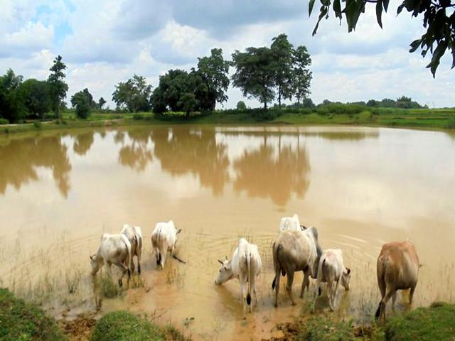 राँची जिले के बेड़ो प्रखण्ड में जल संचयन की अद्भुत परम्परा