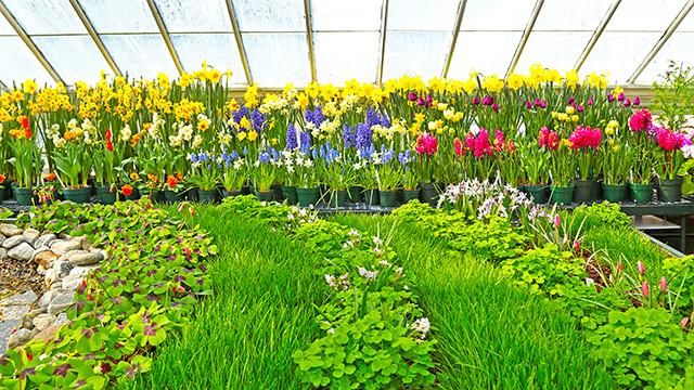 Spring Flower Show 2016