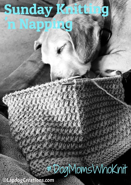 Sunday Knitting 'n Napping - Sophies style! #DogMomsWhoKnit #knitting #sleepingdog #GetYourKnitOn #LapdogCreations ©LapdogCreations