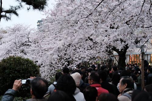 Classic Chrome Sakura viewing at Chidorigafuchi moat 31