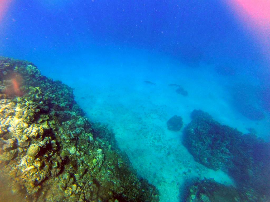 Excursión al arrecife en las islas caimán con el MSC Opera al fondo islas caimán - 26250573356 d07041af35 b - Snorkel en las Islas Caimán