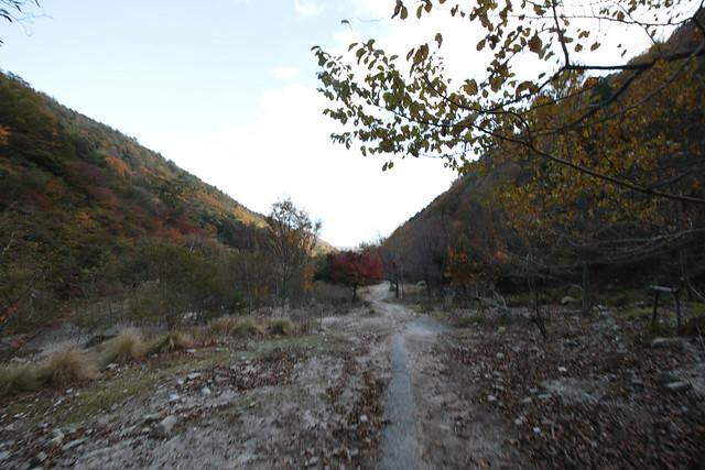 20141122-武奈ヶ岳&京都ライトアップ-0466.jpg