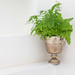 TonivS posted a photo:	Airbnb homes to rent - bathroom plant (detail)